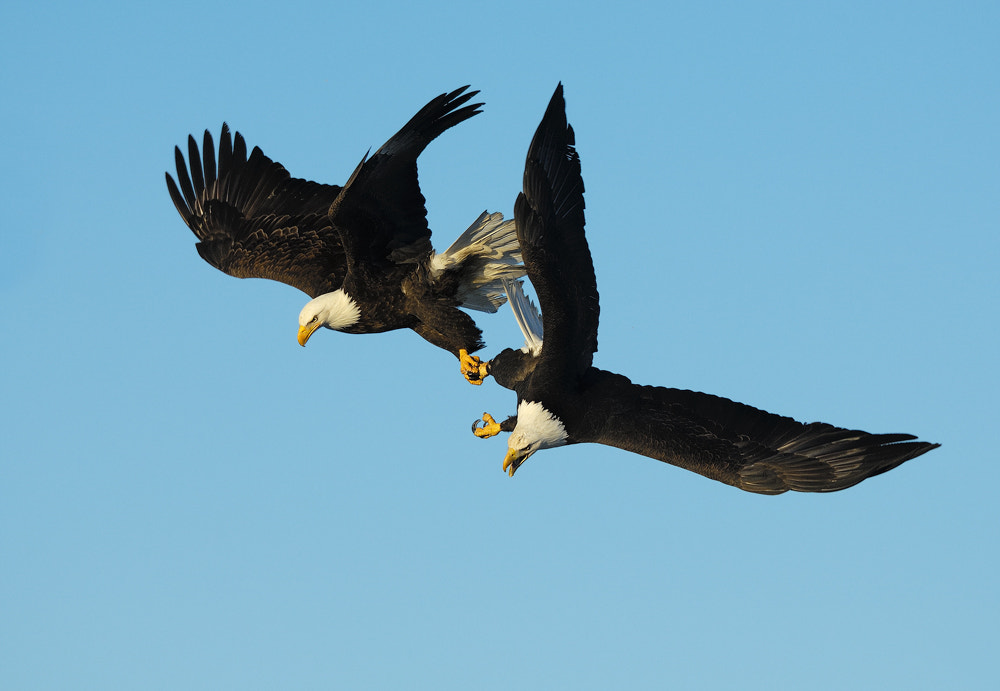 Photograph Holding Hands by Harry  Eggens on 500px