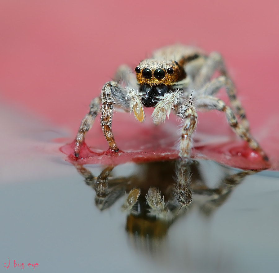 Photograph pink Spider ! by bug eye :) on 500px