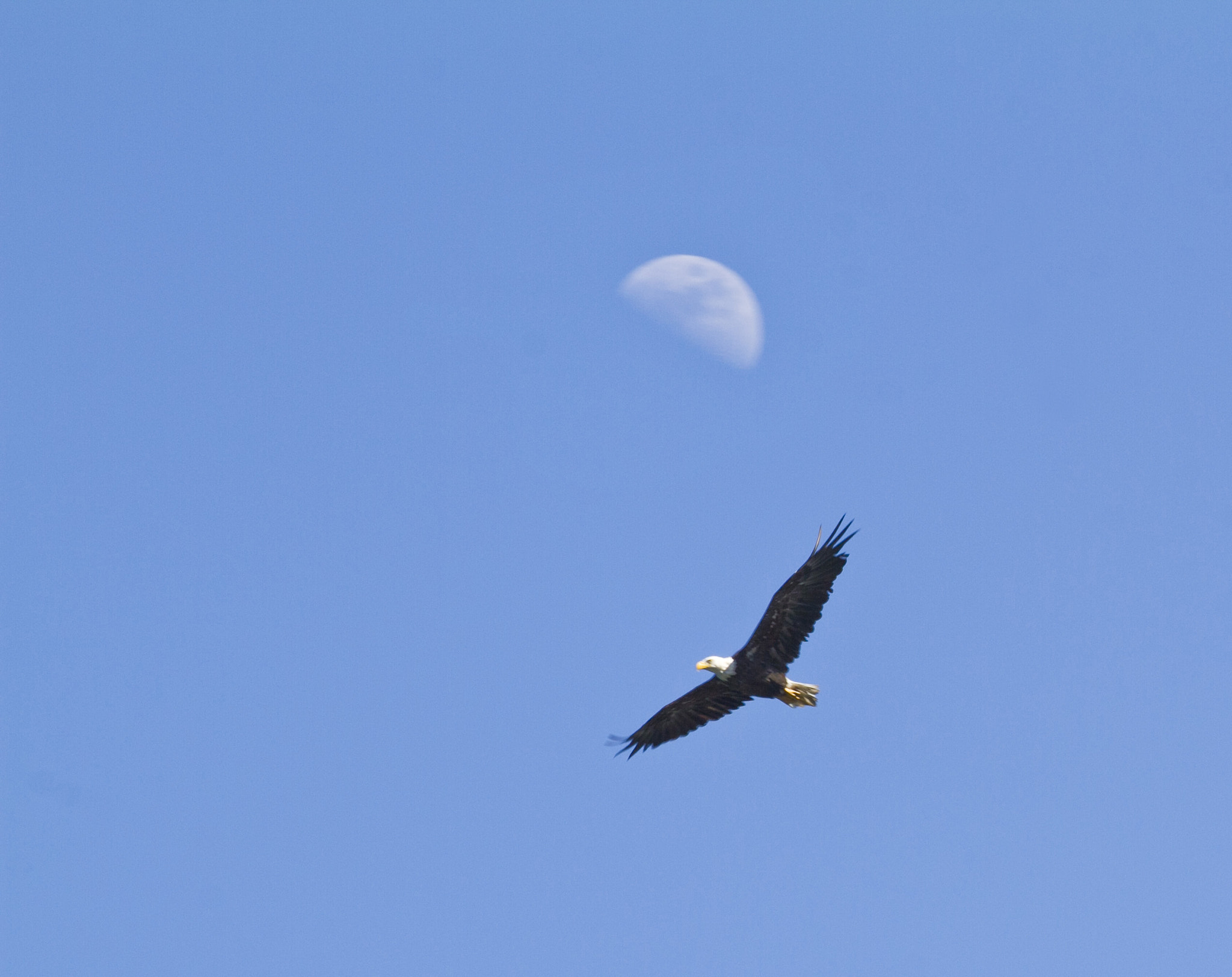 Photograph Lunar Eagle by Robert Evans on 500px