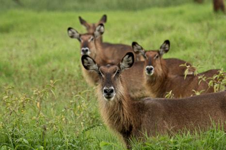 Photograph four of them  by velit gazel on 500px