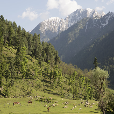 Aru Valley