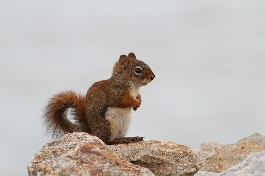 Photograph sea side squirrel by H Singh on 500px