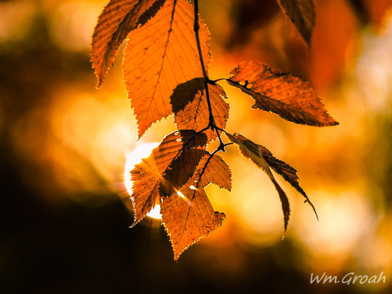 Photograph Leaf Peeper by William Groah on 500px