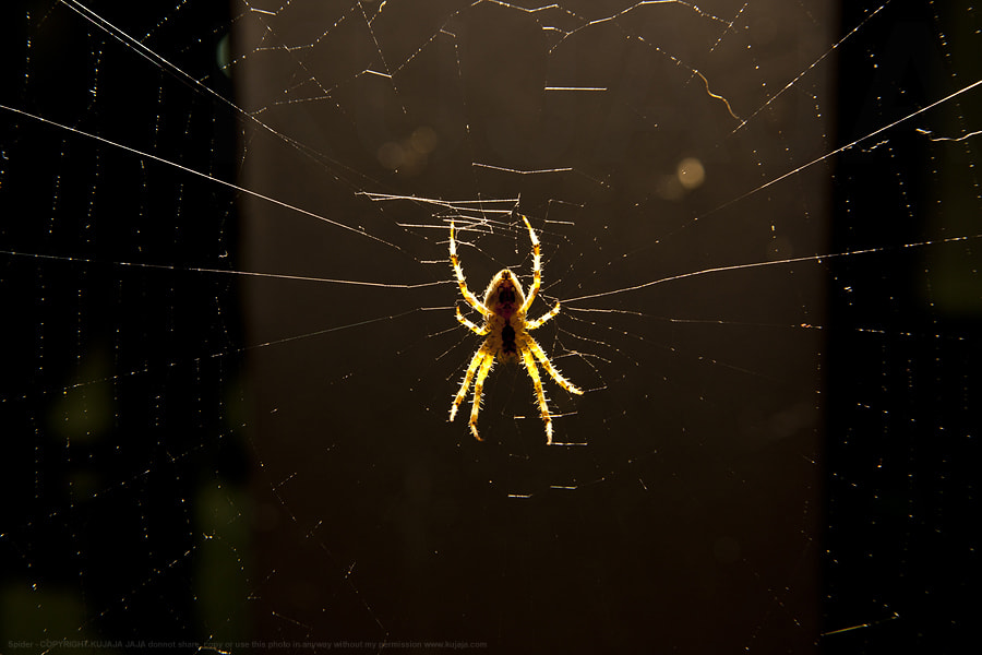 Photograph Spider at night by K J on 500px