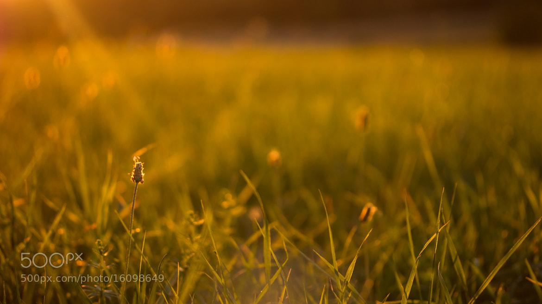 Photograph Warm Sun #2 by Volker Buchwald on 500px