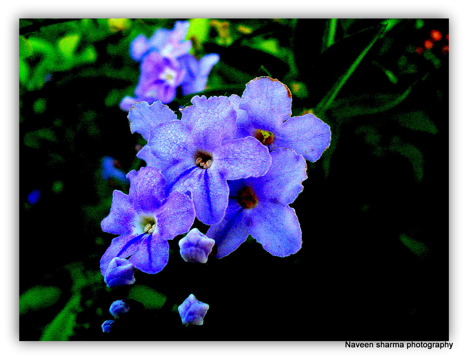 Photograph VIOLET GLAMOUR by naveen sharma on 500px