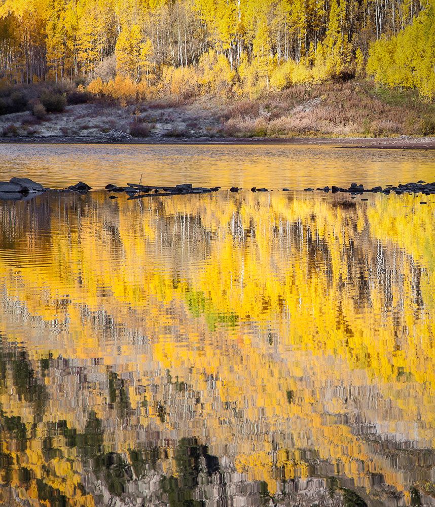 Photograph Brilliant Aspen  by Valerie Millett on 500px
