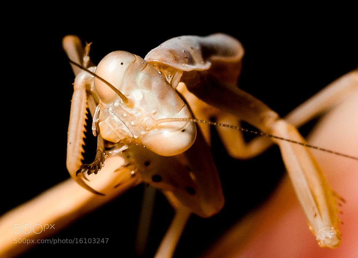 Photograph Mantis by yunus emre özçelik on 500px
