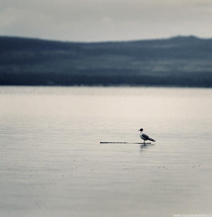 Der einsame Seemann