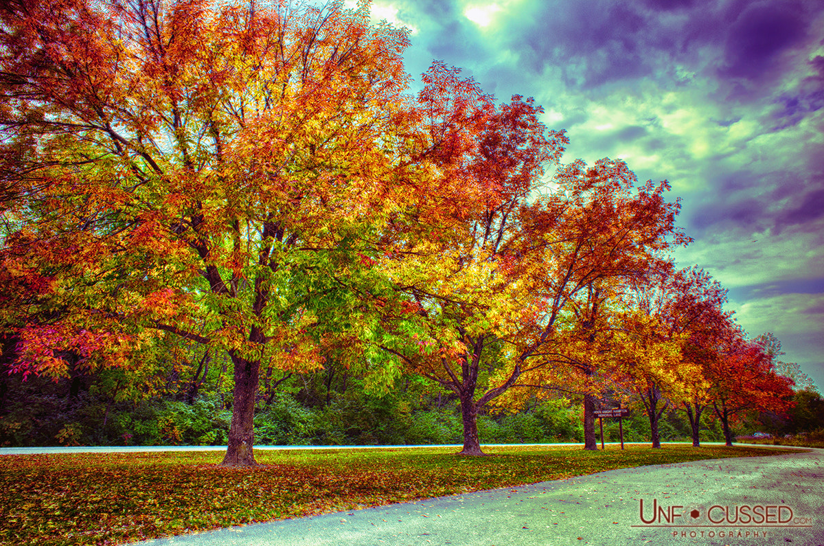 Photograph Autumn Tree Line at Busch by Bill Tiepelman on 500px