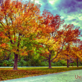 Autumn Tree Line at Busch by Bill Tiepelman (oddballz)) on 500px.com