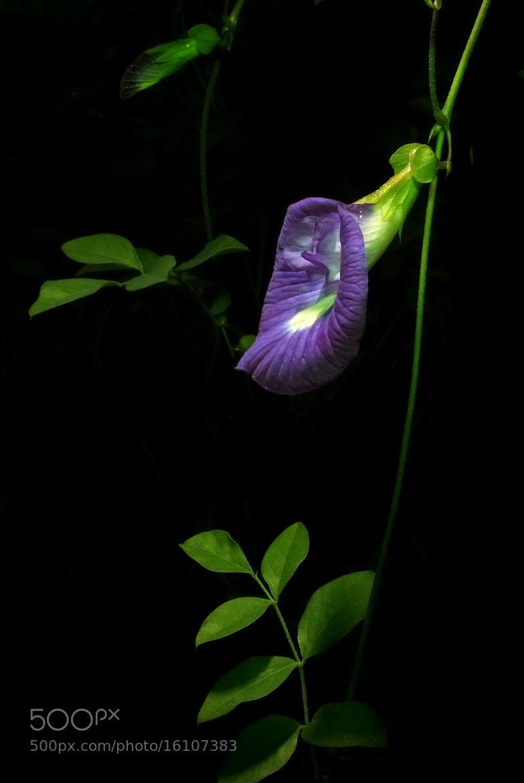 Photograph Untitled by Weerachai Mutahatakorn on 500px