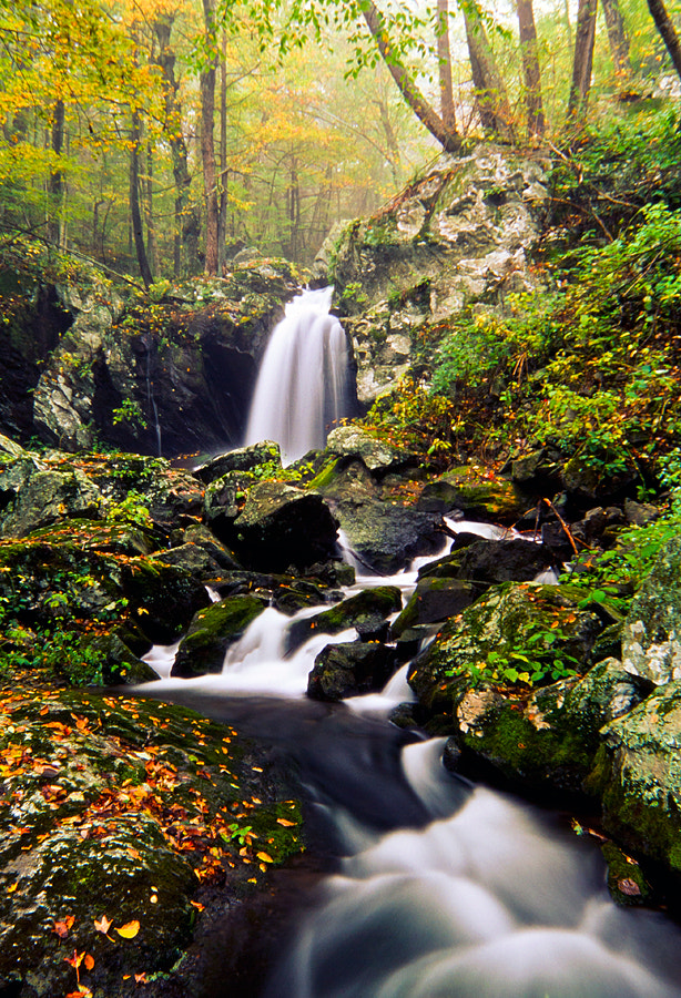 Photograph Forest flow by Damien Wogan on 500px