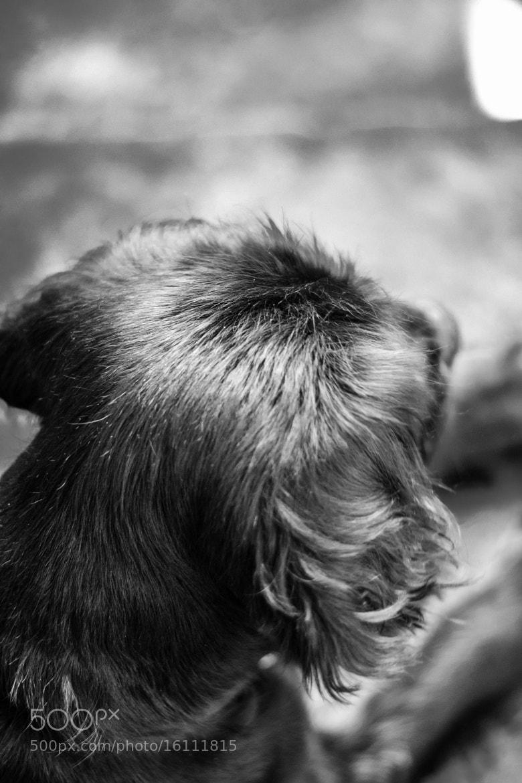 Photograph Xuxa by Andres Cruz-Wellmann on 500px