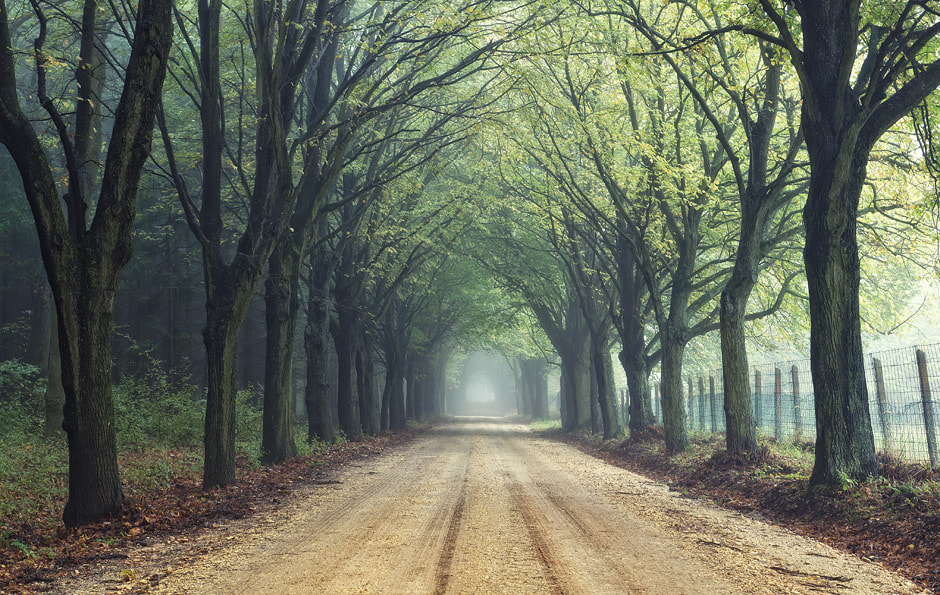 Photograph Autumn forest by Hober Szabolcs on 500px