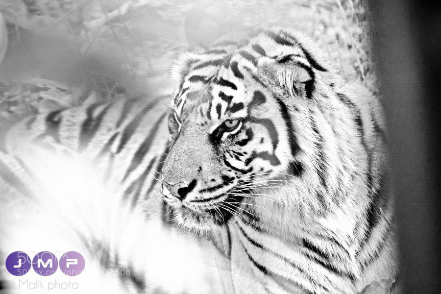 Photograph Untitled by Jash Malik on 500px