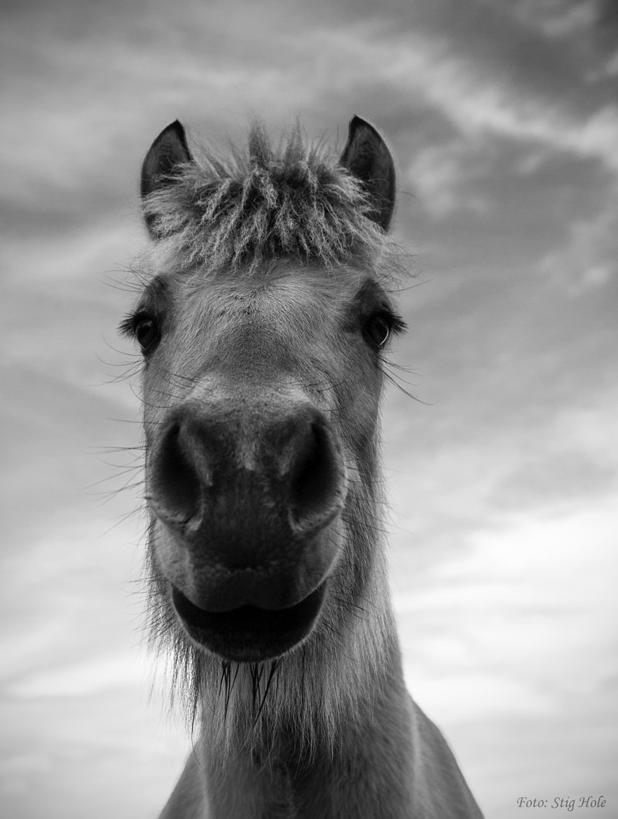 Photograph The Horse by Stig Hole on 500px