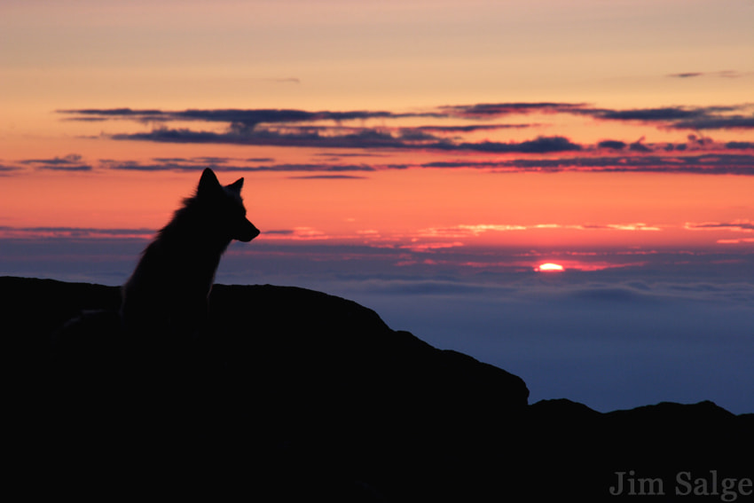 Photograph The Fox and the View... by Jim  Salge on 500px