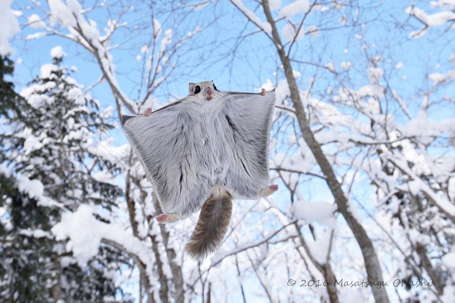 Winter gift by Masatsugu Ohashi on 500px.com