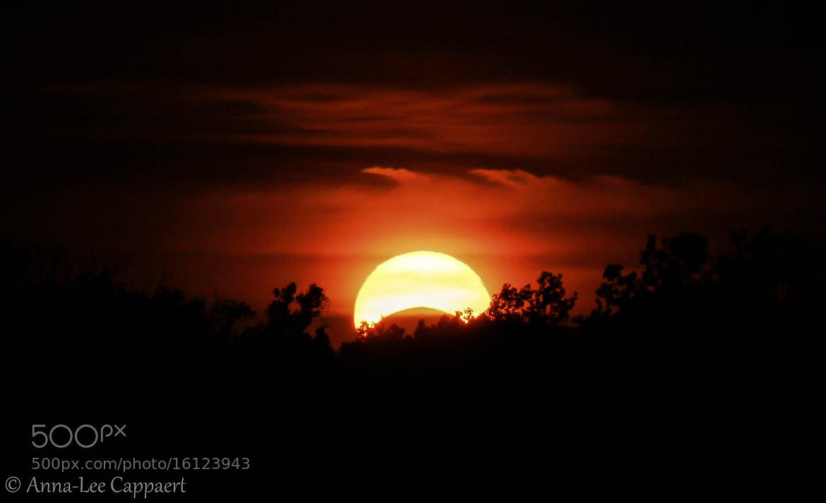 Photograph Annular Eclipse by Anna-Lee Cappaert on 500px