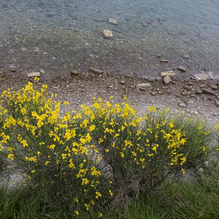 Seashore blooming
