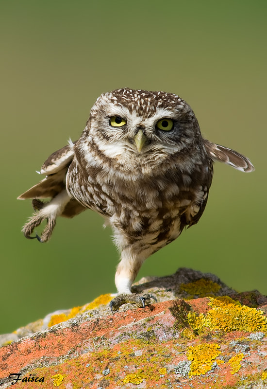 Photograph Karate OWL by Sparky Faísca on 500px