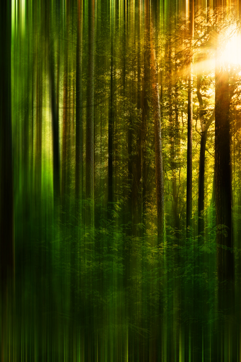Photograph forest by Thomas Christoph on 500px