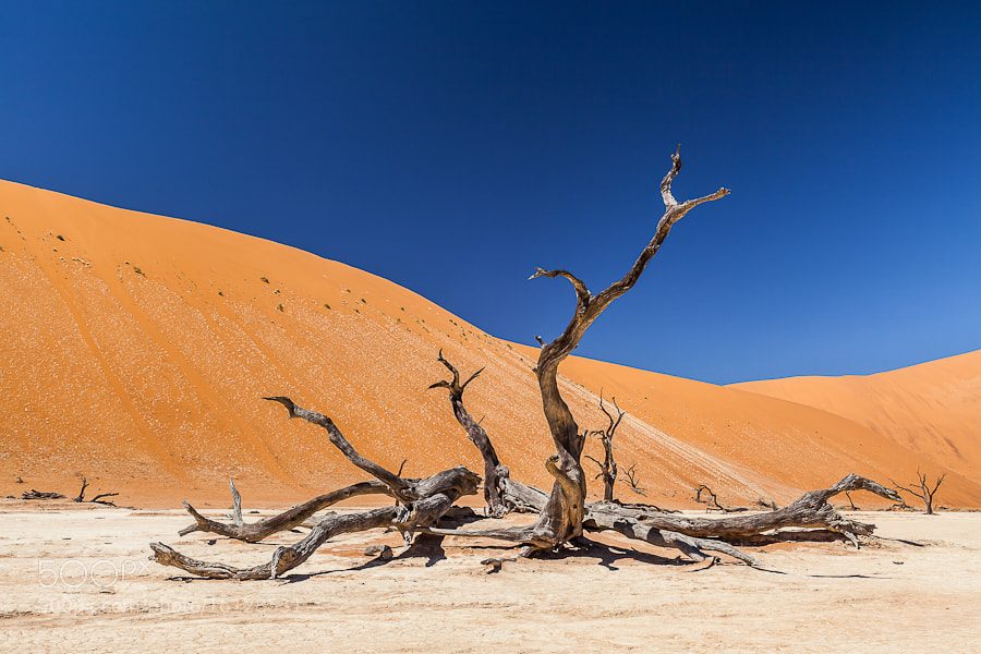 Photograph Desert by Jorge Mambrilla on 500px