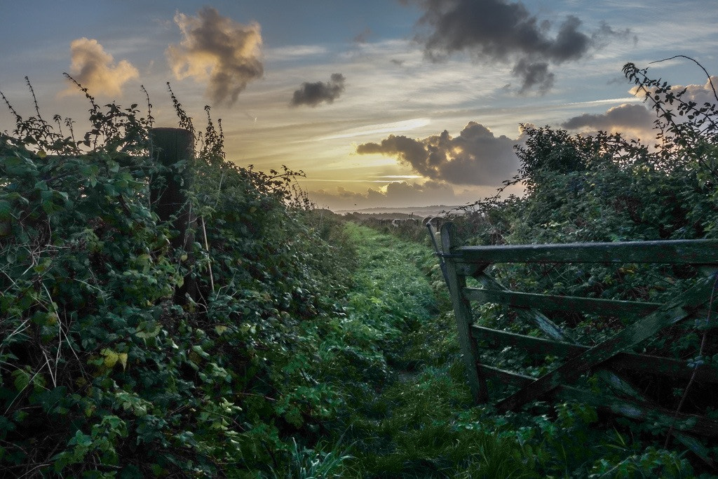 Photograph A dawn gateway by Martin Cook on 500px