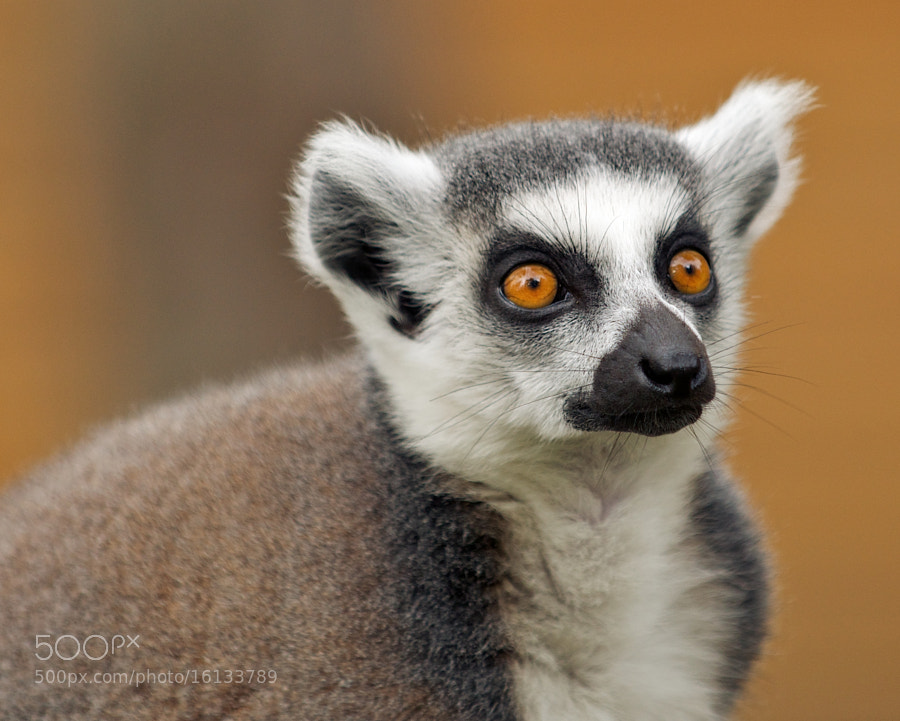 Photograph Wide eyed by Jon Pym on 500px