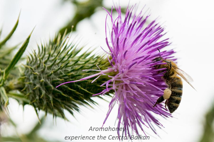 Aromahoney bees