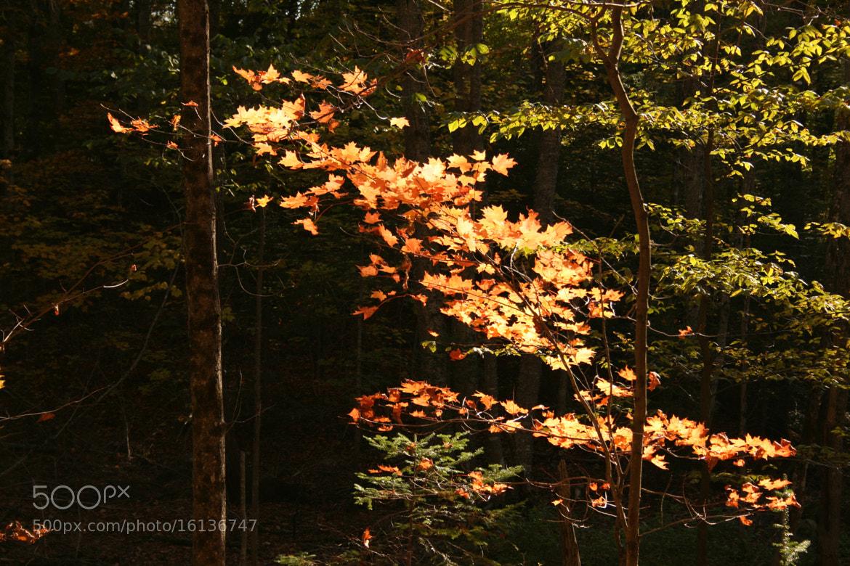Photograph Couleurs d'automne 3 by Régine  Hervy on 500px