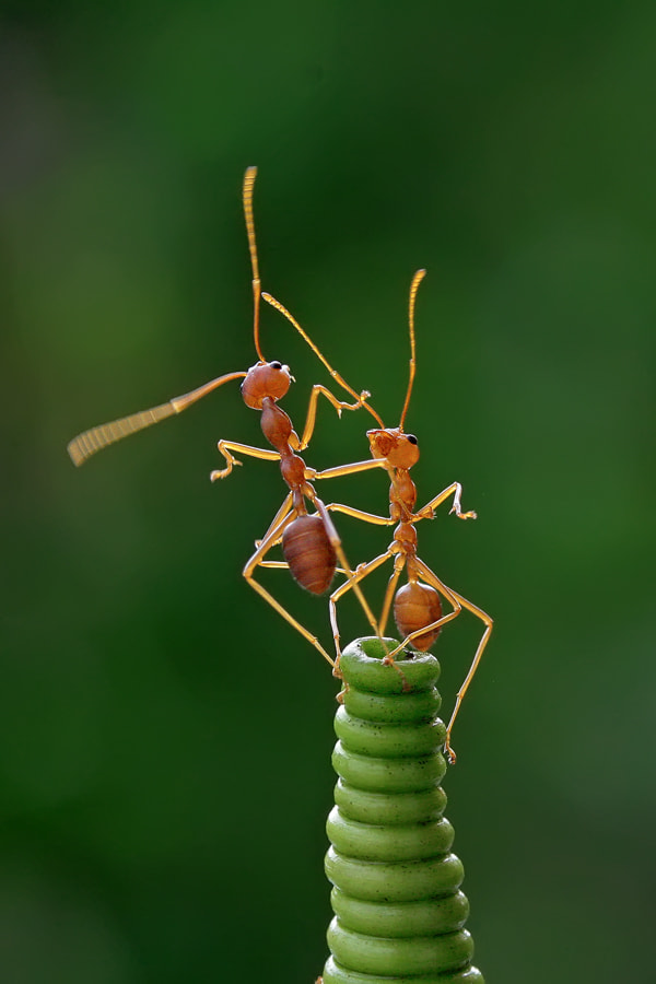 Photograph it take two to tango by teguh santosa on 500px