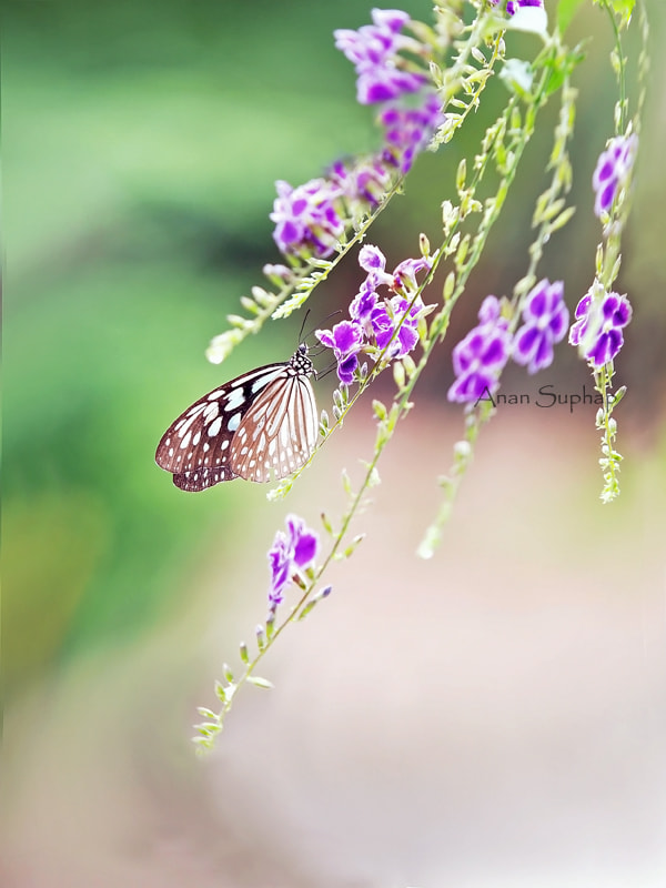 Photograph Happy small. by Anan Suphap on 500px