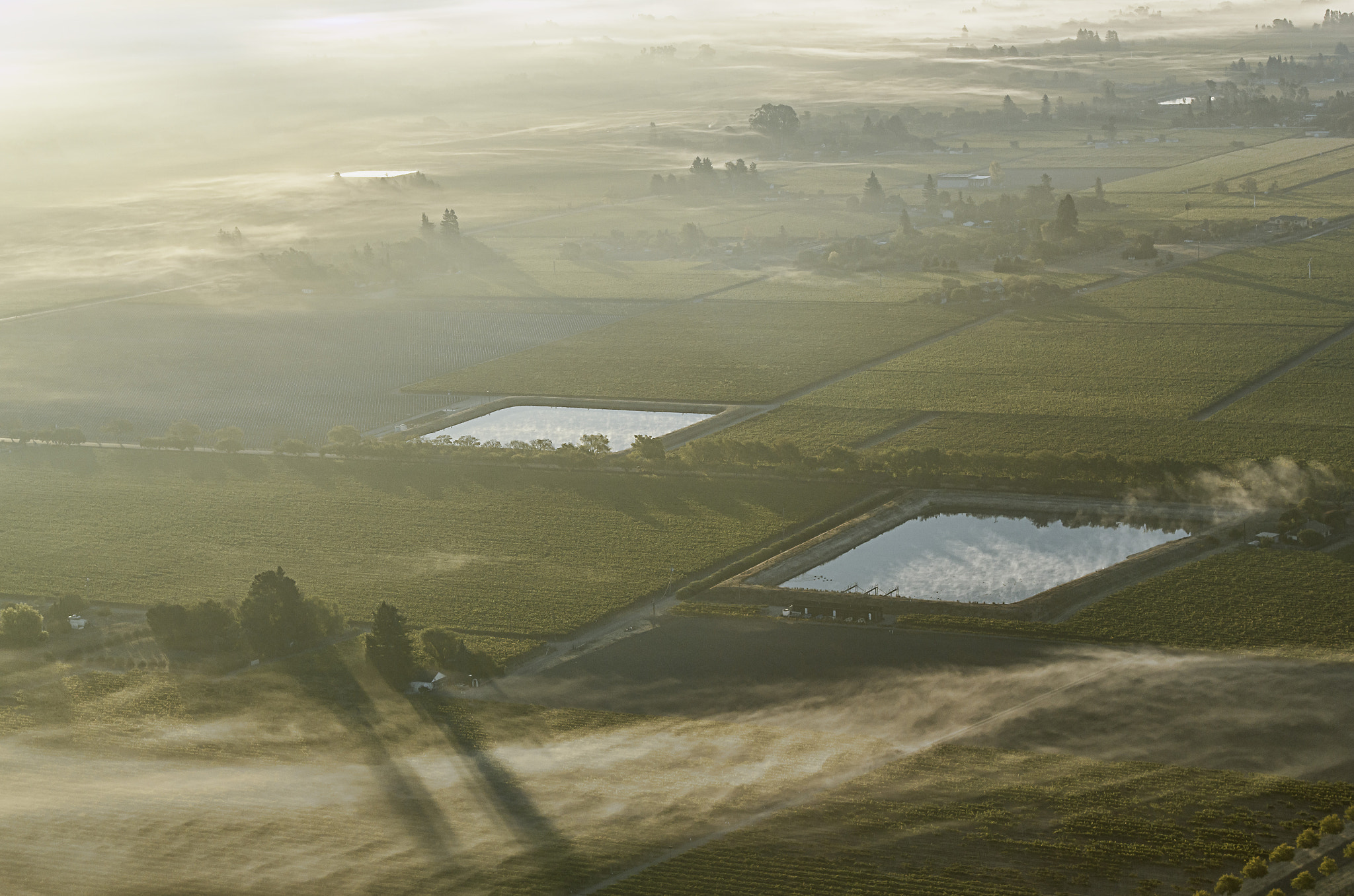 Photograph Vineyard in fog by nick mangiardi on 500px