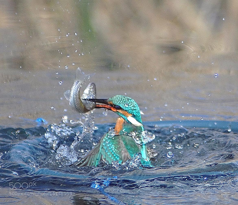 Photograph Untitled by Hirosi Nakajima on 500px