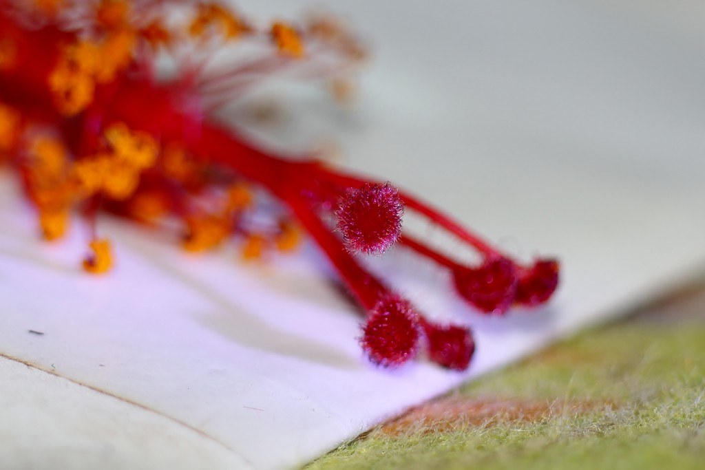 Photograph The Red blob by Sudarshan Kadam on 500px
