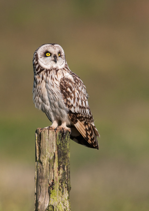 Photograph Plane Spotter Owl by Lea Roberts on 500px