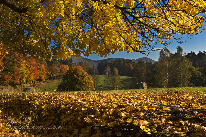Photograph Autumn by Vladimir Borisov on 500px