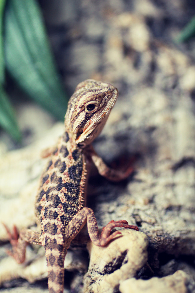 Photograph Pixel The Baby by Aidan Hornsby on 500px