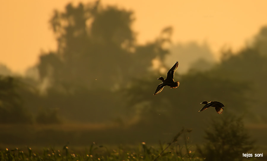 Photograph Flight of fantasy by Tejas Soni on 500px