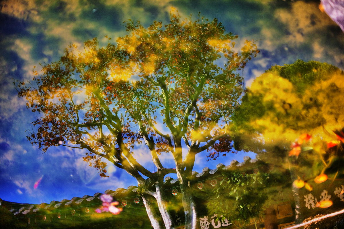 Photograph Fall in the water by JIHOON HWANG on 500px