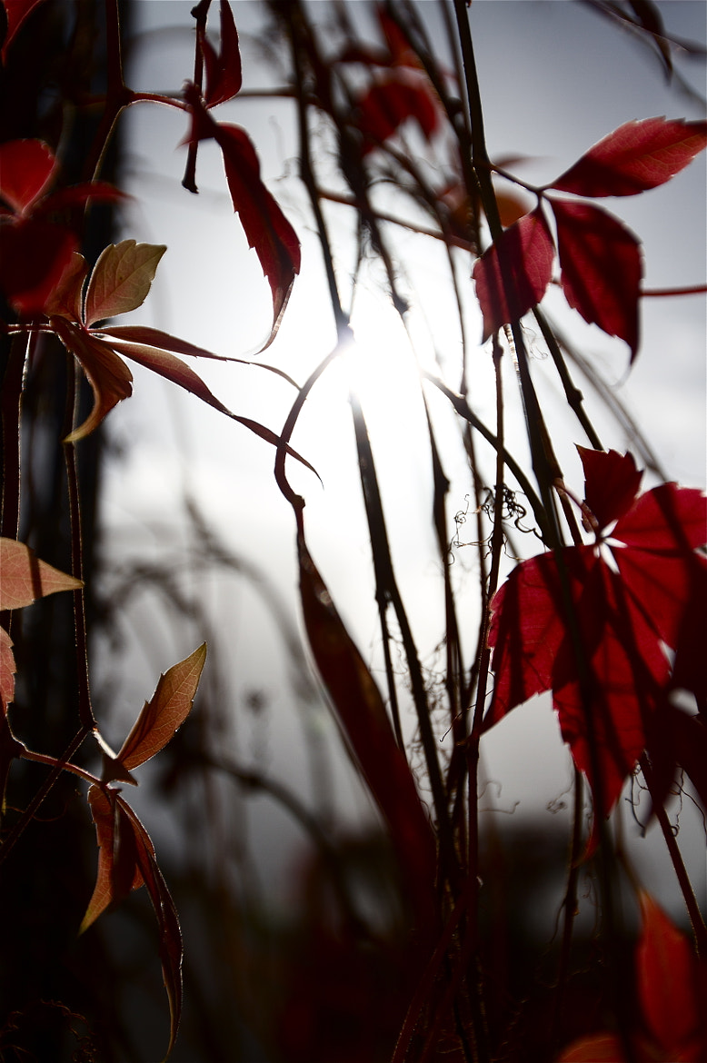 Photograph Autumn Two by Layla Perchal Neal on 500px