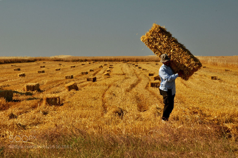 Photograph Hasat Sonu....... by ÖMER ŞAHİN  Photography on 500px