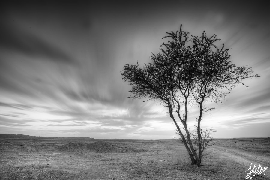 Photograph lonely by Abdullah Al-Okime on 500px