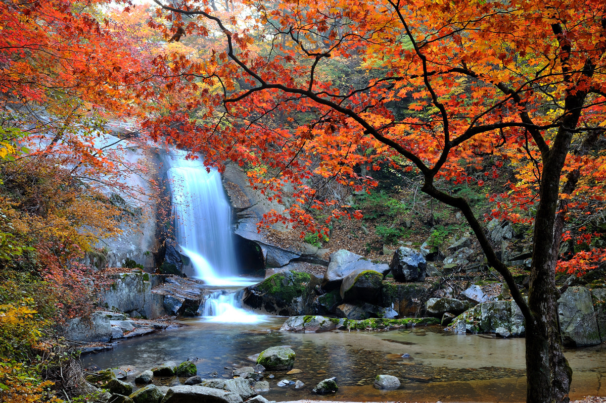 Photograph Fall of Waterfall by Lee jin su on 500px