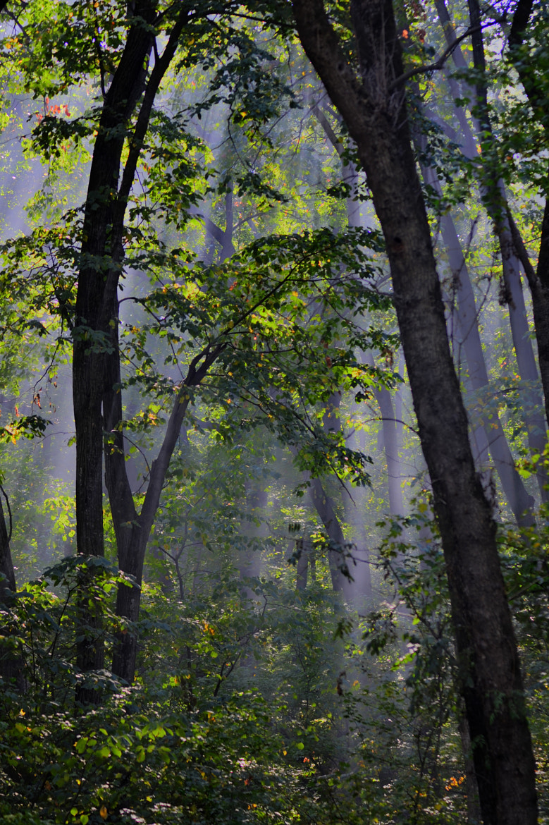 Photograph Into the forest by Claudia Gadea on 500px