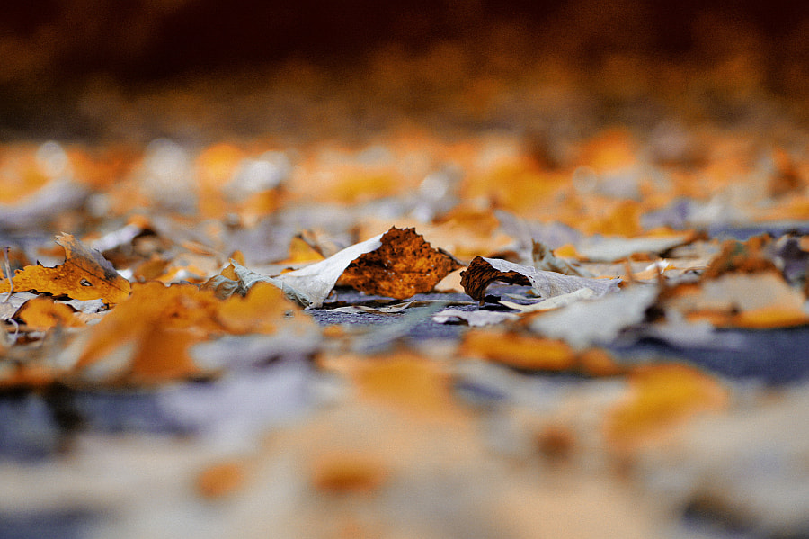 Photograph Things we lost in the fire by Vladimir Perfanov on 500px