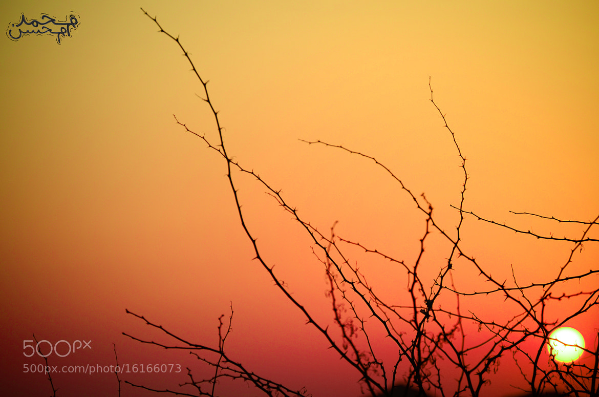 Photograph Sun set by Mohamed Mohsen on 500px