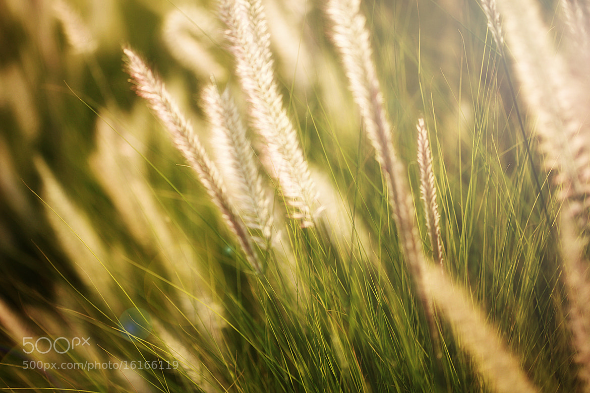 Photograph sunshine by safa kamar on 500px